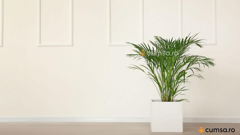 Cum sa reduci umiditatea din casa - Palmier Areca